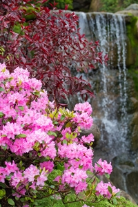 Pink flowers w/ Waterfall